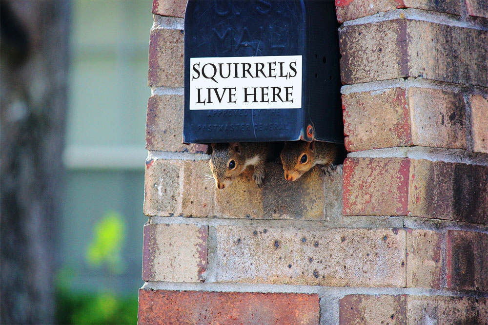 Squirrels live in our mailbox
