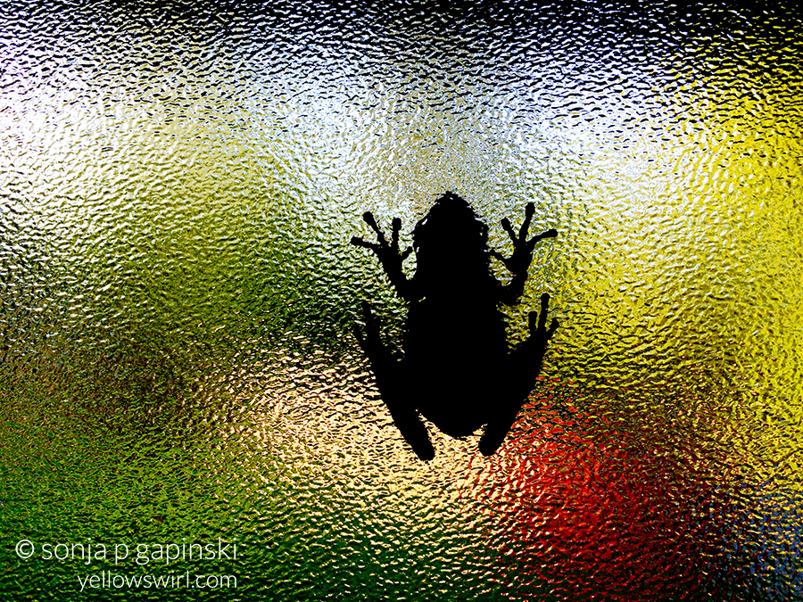 frog-window-shadow